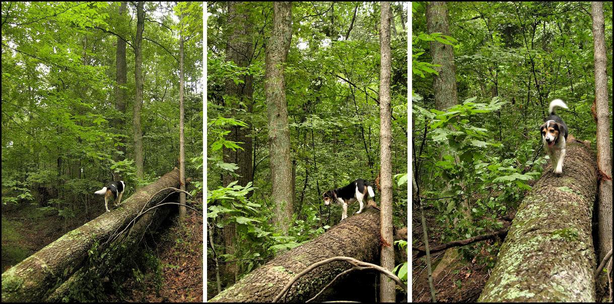 sniff-treebalance2009-08-22